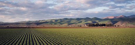 Agricultural Long.jpg