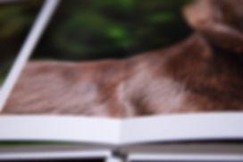 caroline dell photography layflat photo books