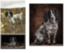 DOTTIE SPANIEL, CAROLINE DELL DOG PHOTOGRAPHY