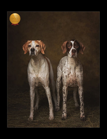 CAROLINE DELL DOG PHOTOGRAPHY, GOLD AWARD FOR ENGLIH POINTER FROM NPS