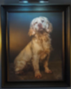 FRAMED CANVAS OF CLUMBER SPANIEL BY CAROLINE DELL DOG PHOTGRAPHY