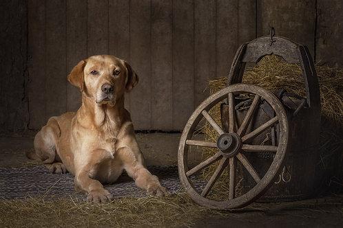 CREATIVE DOG PHOTOGRAPHY WORKSHOP