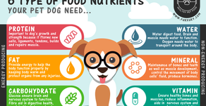 Basic Nutrients Your Pet Dog Need!