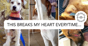 What comes to your mind when you think of animal cruelty?