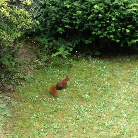 Neulich im Garten ...