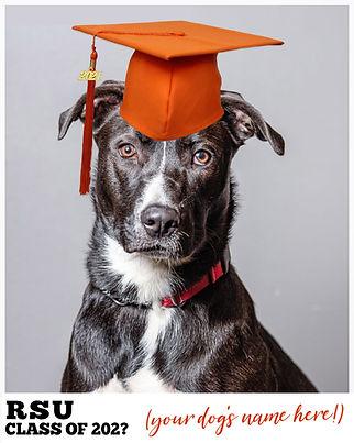 Rock Star University Dog Training / Boot Camp