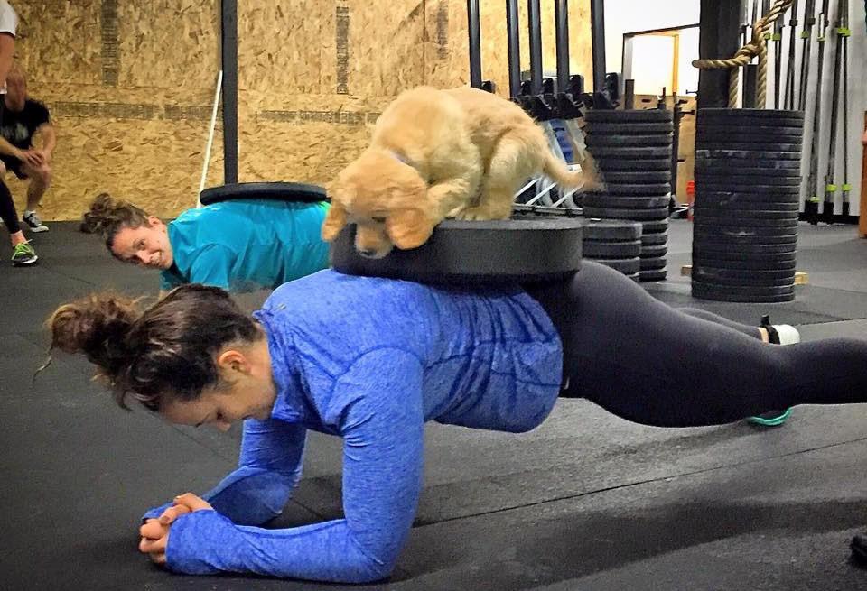 dog-on-plank.jpg