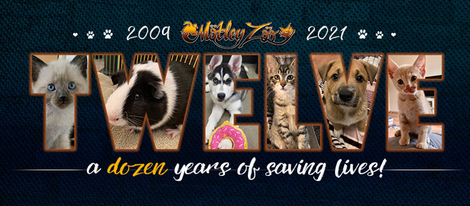 Motley Zoo is celebrating its 12 year anniversary of saving lives in 2021!