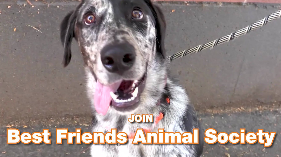 Best Friends Animal Society Strut Your Mutt 2020 Promo Video