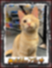 Angel on Fire - Rescue cat available