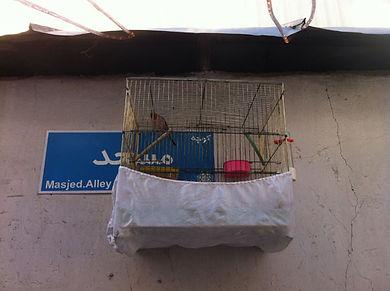 tehran bird quality.jpg