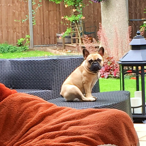Small Dog Pet Sitter