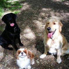 Labrador Pet Sitter