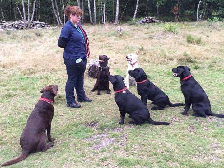 Labradors Welcome!