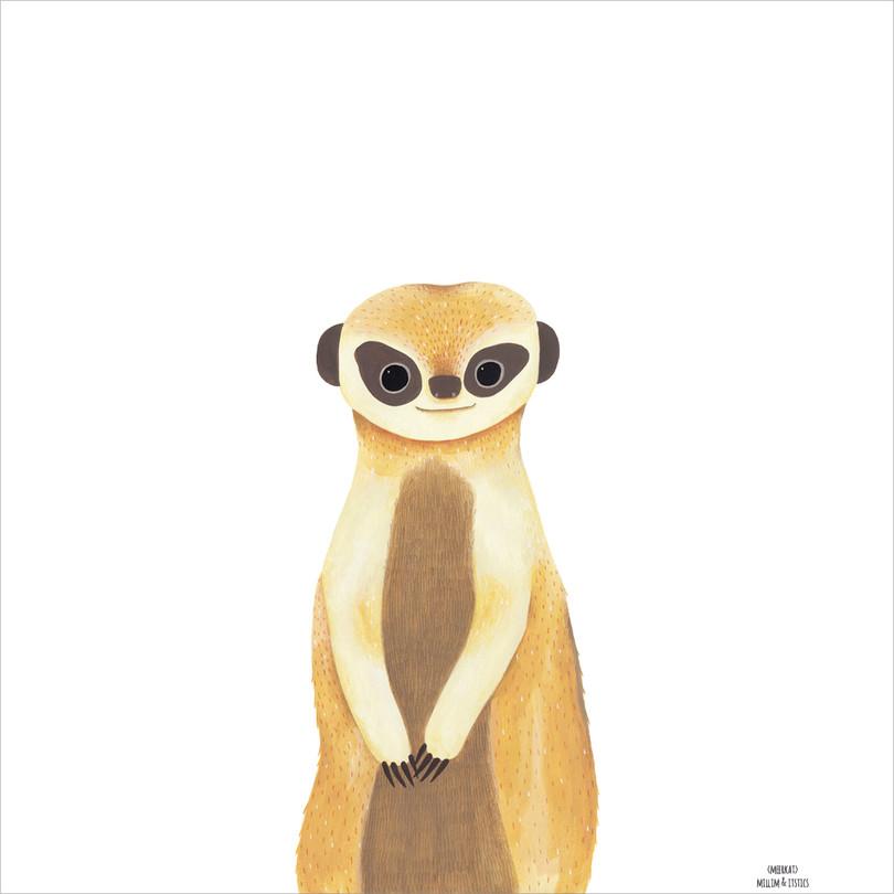 [Millim]Zoo_meerkat_1000.jpg