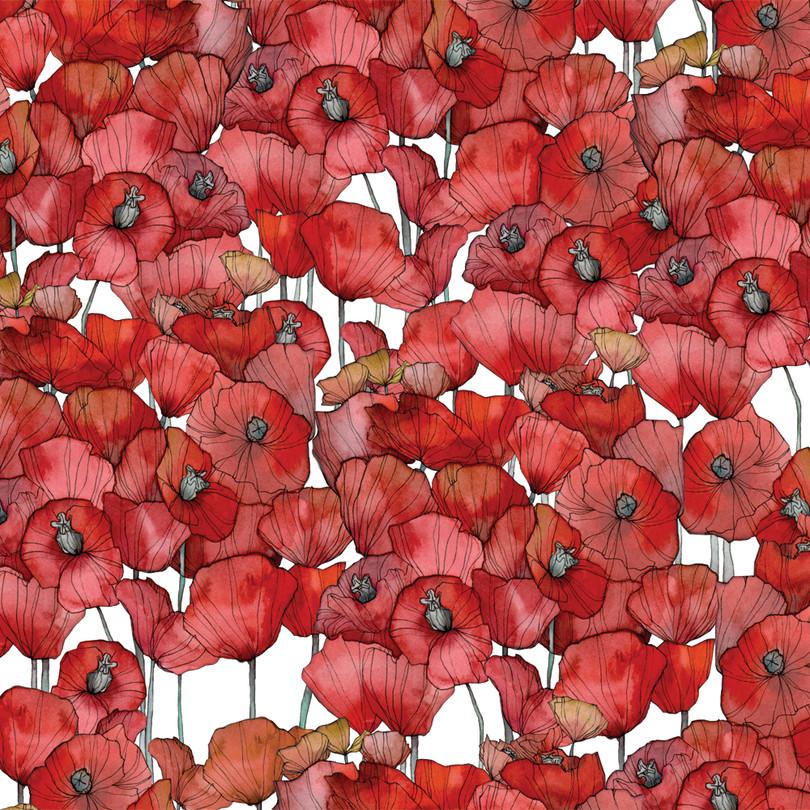[Jara]Poppy.jpg