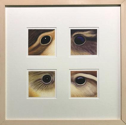 4 Wrens