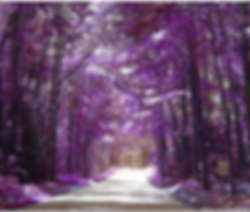 Picture of purple trees and snow