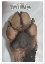 paw photo ad.png