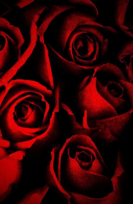 red roses_edited.jpg