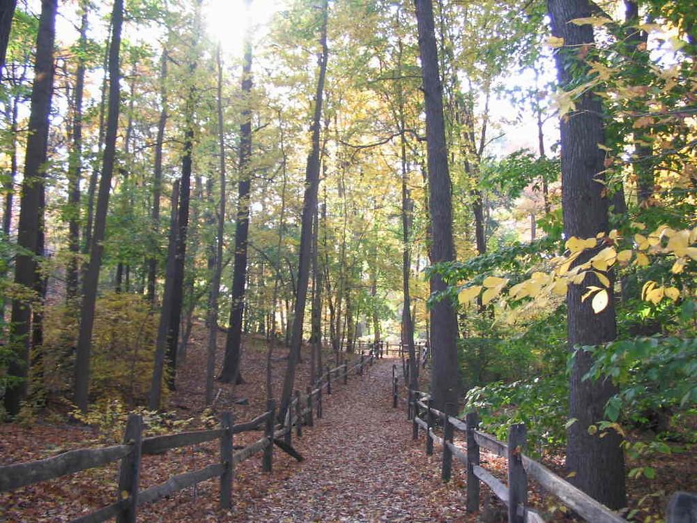Trail Path.jpg