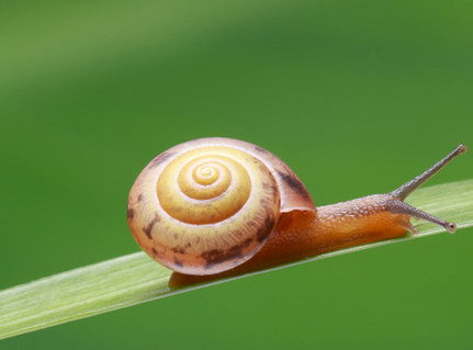 Like a Snail - or a Shooting Star?