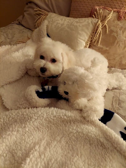 Marley with his friend - 2.jpg