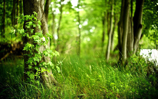 why is the world green?