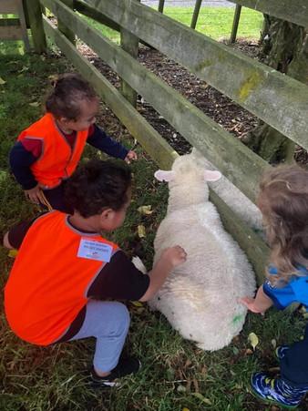 Enrolled children enjoying a farm visit hosted by Eduplay Childcare Otahuhu