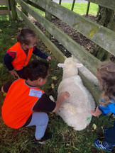 Enrolled children enjoying a farm visit hosted by Eduplay Childcare Otahuhu