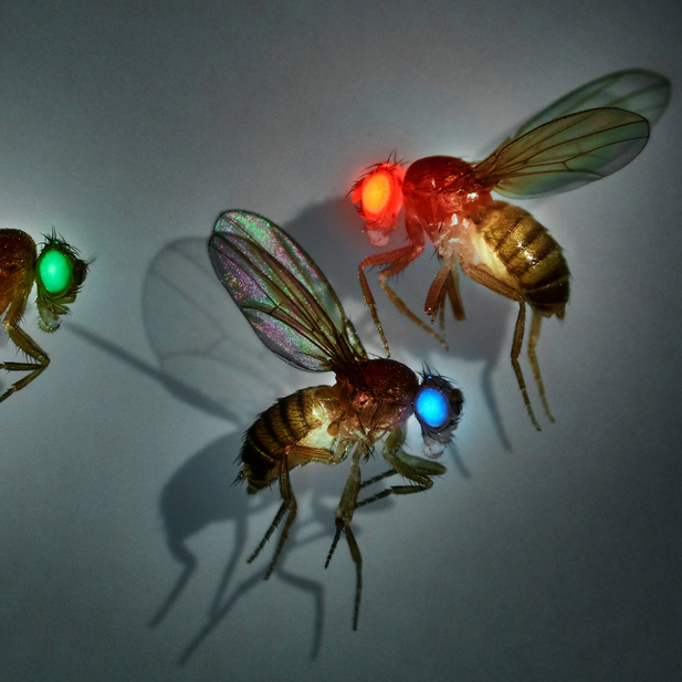 The Gene Drive Dilemma: We Can Alter Entire Species, but Should We?