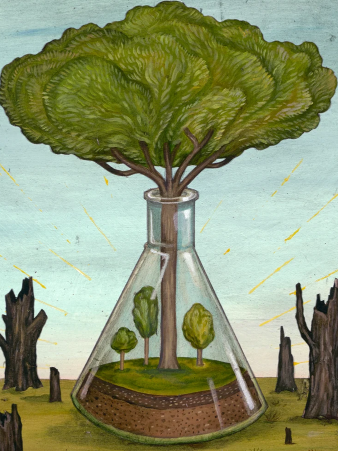 The Most Controversial Tree in the World