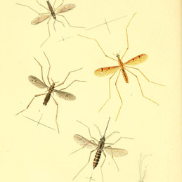 Before genetically modified mosquitoes are released, we need a better EPA