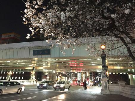 日本橋の夜桜