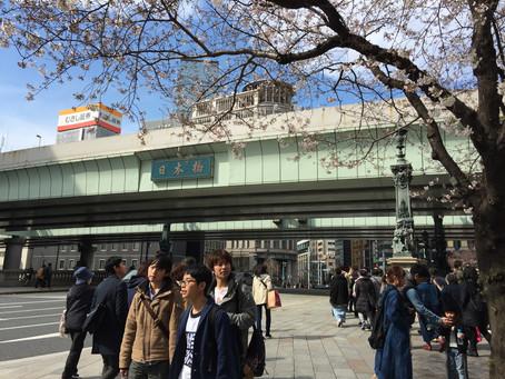 東京日本橋の桜
