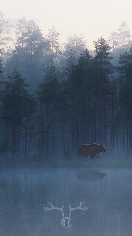 _9060314 bear2 wa2.jpg