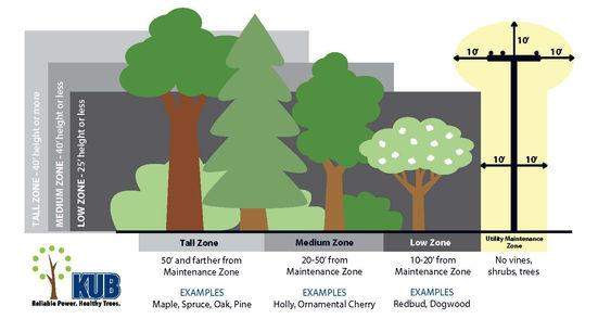 Veg Mgmt Tree Graphic.jpg