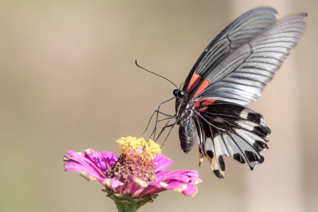 A portfolio image of a butterfly by Toronto based commercial photographer BEN HEMMINGS MEDIA