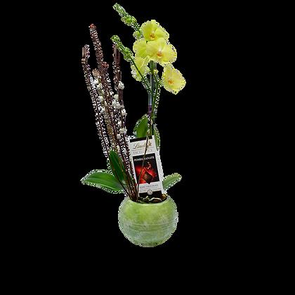 Orquídea Sttutgart