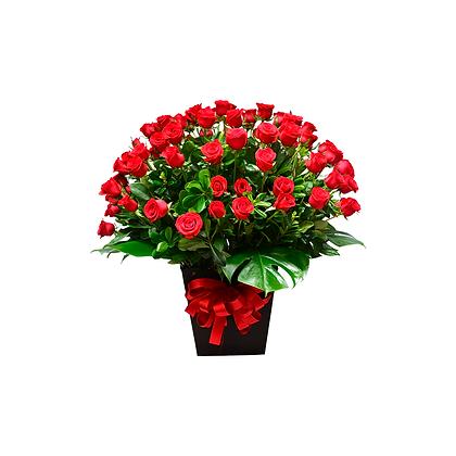 Rosas Lorenza
