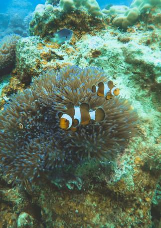 Found Nemo(s)