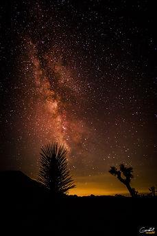 Space-Tree-2-WEB.jpg
