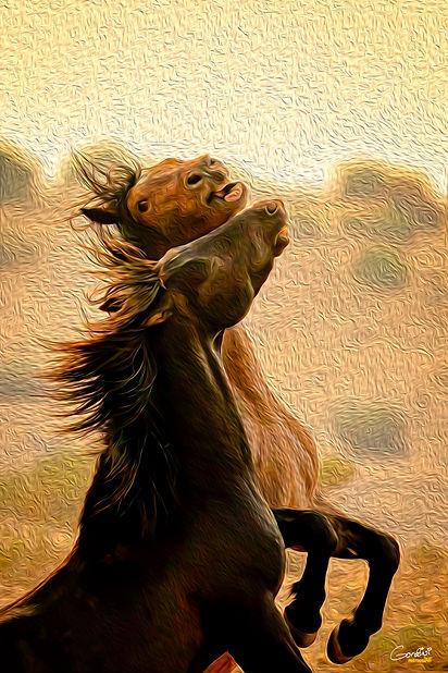 Wild Horses, Wild Mustangs, Nevada,