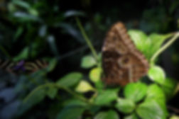 Butterfly, African, African Butterfly, exotic,