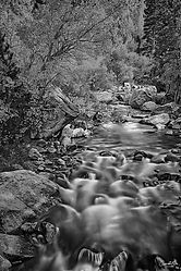 Creekside-B&W-WEB.jpg