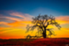 tree, ranch, sunset, clouds,