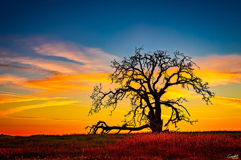 Tree, sunset, country, ranch,