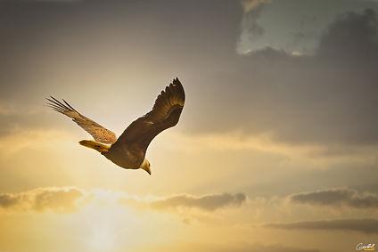 Ethereal, Eagle, Bald Eagle, Bird, Flying,