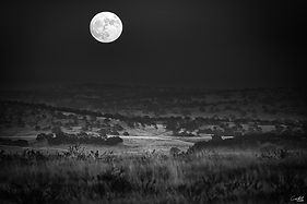 County-Super-Moon-B&W-WEB.jpg