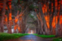 FireTube-WEB.jpg